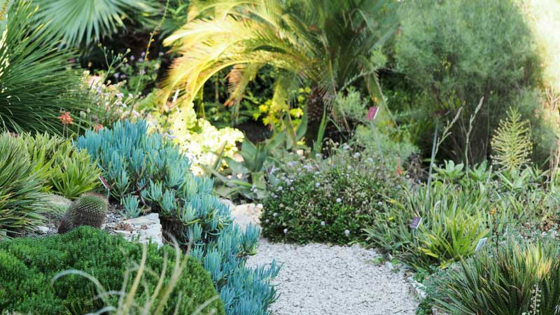 Les plantes succulentes et xérophytes, au jardin du Val Rahmeh