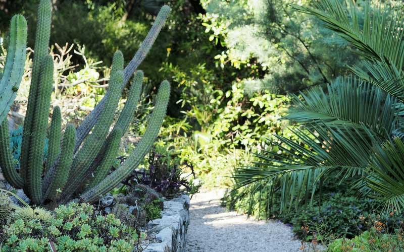 Cactus et plantes succulentes, au Val Rahmeh