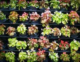 Collectionneursde plantes : ne tombez pas dans la monomanie!