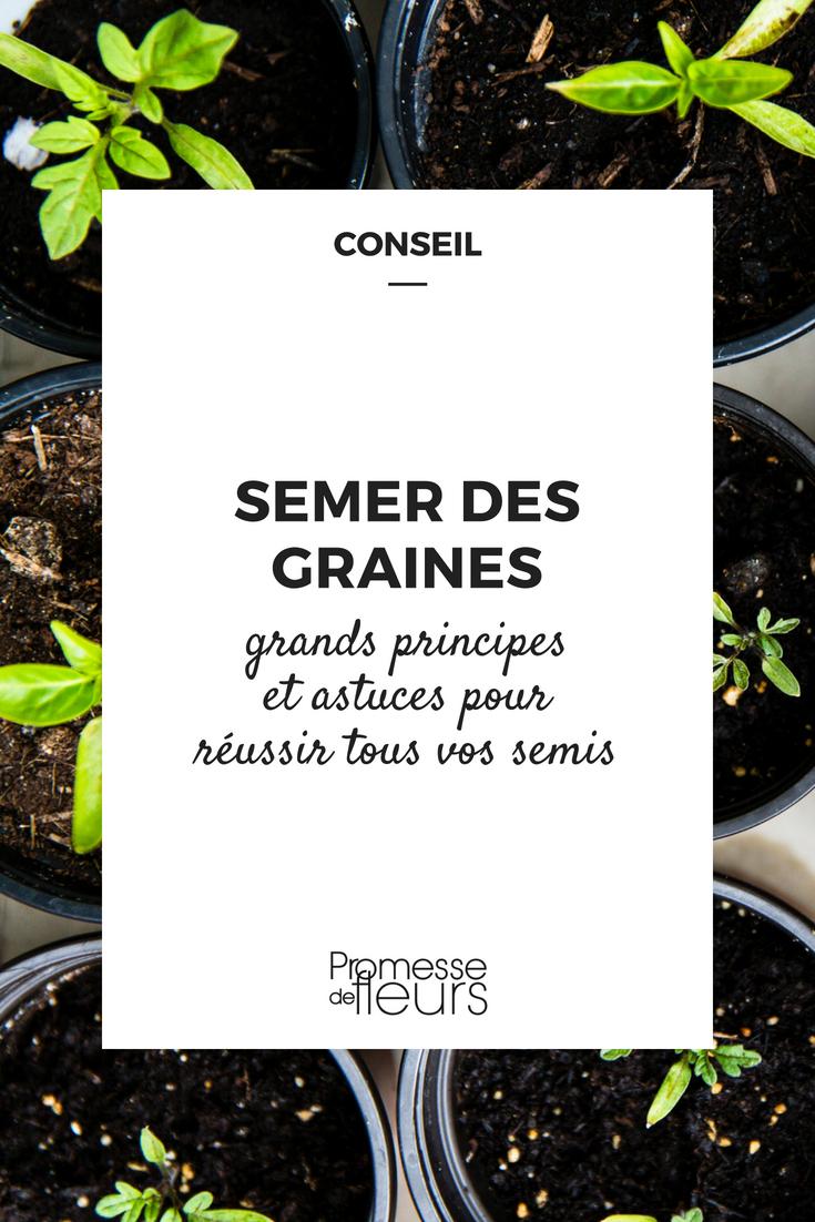 Comment Planter Les Graines De Persil semer des graines : tout ce qu'il faut savoir, nos conseils