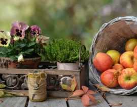 Jardinières et potées d'automne : 3 idées, 3 styles