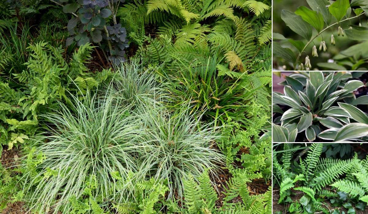 Idées d'association au jardin avec des carex, fougères et hostas