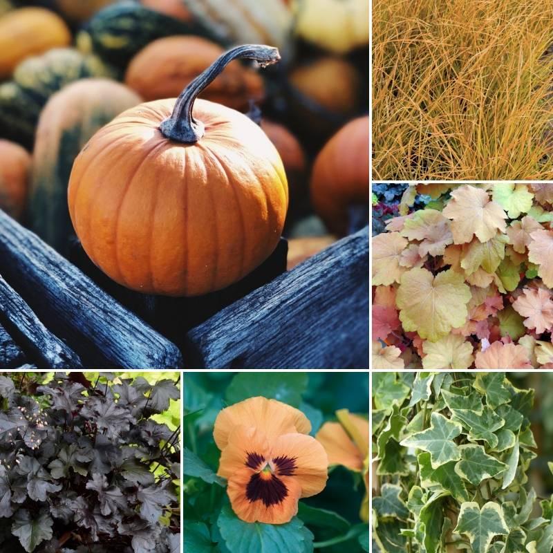 jardini res et pot es d 39 automne 3 id es 3 styles blog promesse de fleurs. Black Bedroom Furniture Sets. Home Design Ideas
