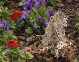 10 façons de faire mourir une plante... naturellement !