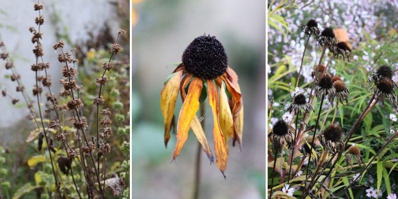 Fleurs fanées en automne