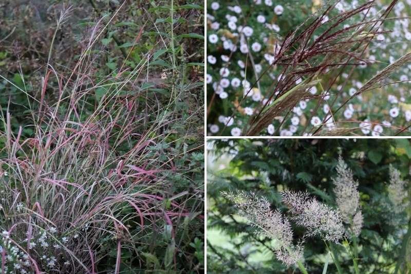 Graminée, fleurs, d'automne