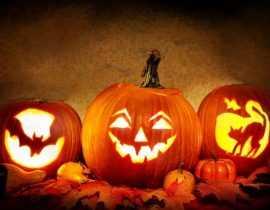 Spécial Halloween : 15 plantes qui font peur !
