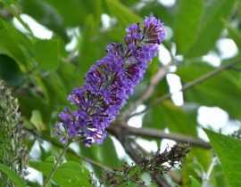 15 plantes très faciles à bouturer