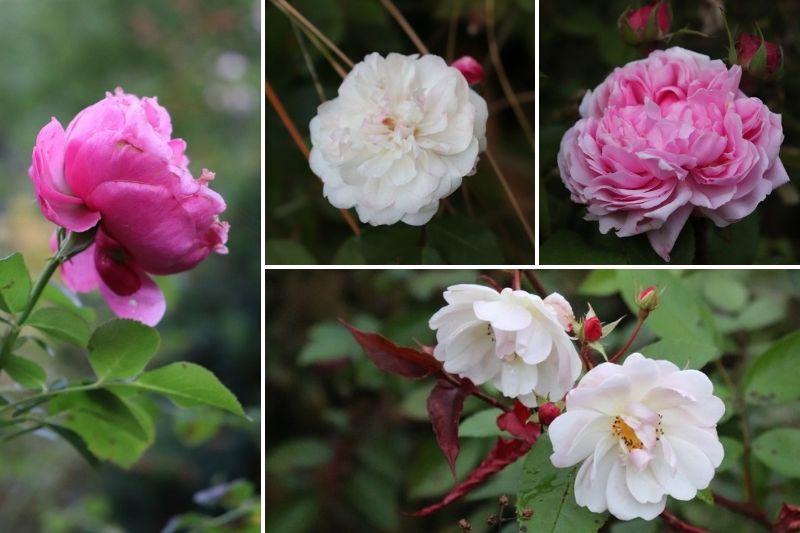 Fleurs d\'automne, les plus jolies espèces et variétés de mon jardin ...
