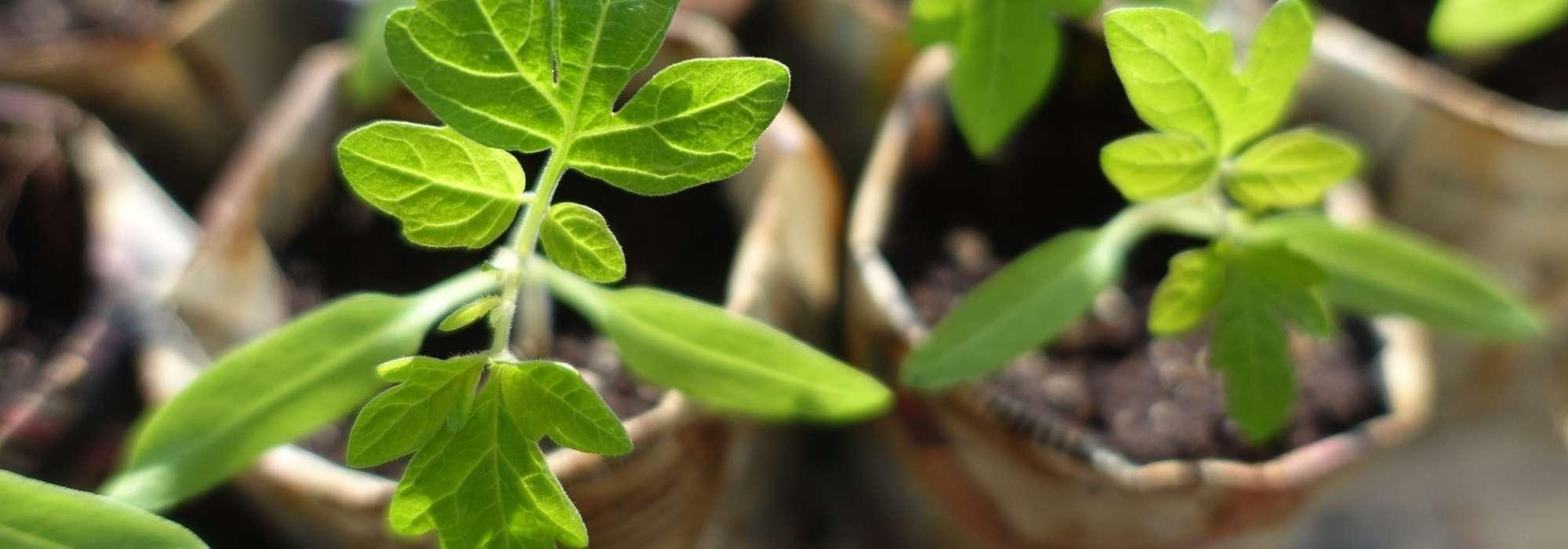 """Résultat de recherche d'images pour """"troc plantes"""""""