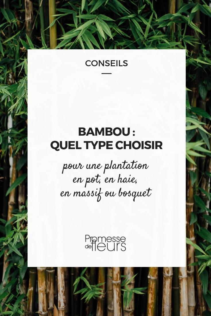 Quel type de bambou choisir ? Nos conseils - Promesse de Fleurs