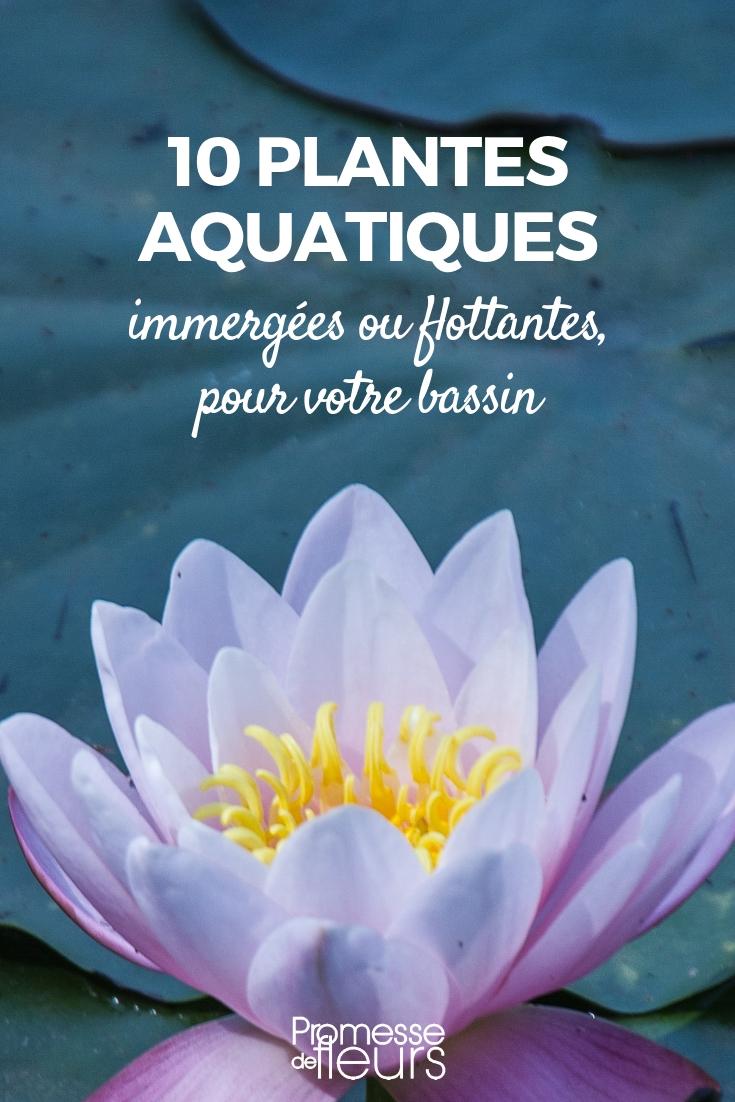 Comment Faire Un Petit Bassin Aquatique bassin : 10 plantes aquatiques, immergées ou flottantes
