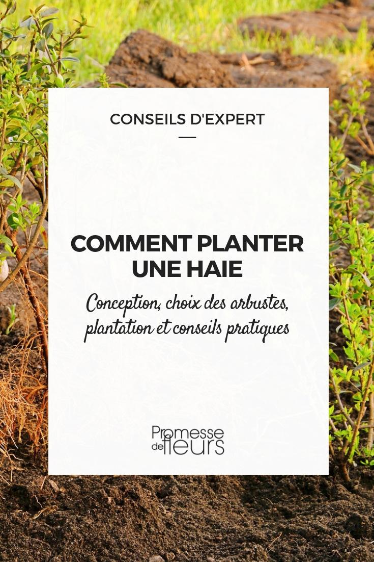 la plantation d'une haie - conseils pratiques