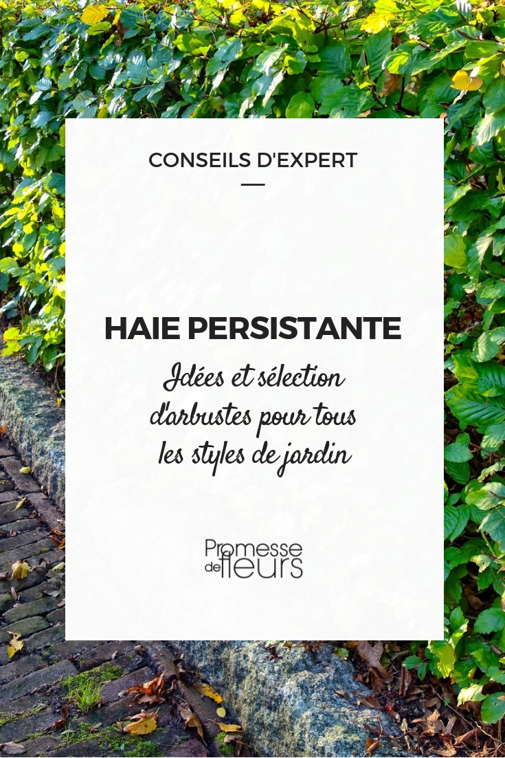 Haies Persistantes Des Arbustes Pour Tous Les Styles De Jardin