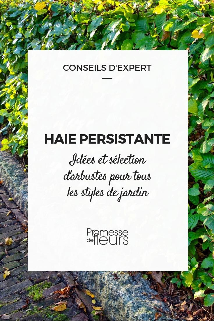 arbustes de haie feuillage persistant