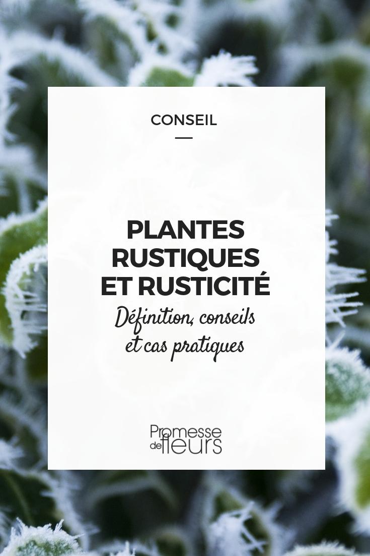 Plante rustique et rusticité : définition, conseil