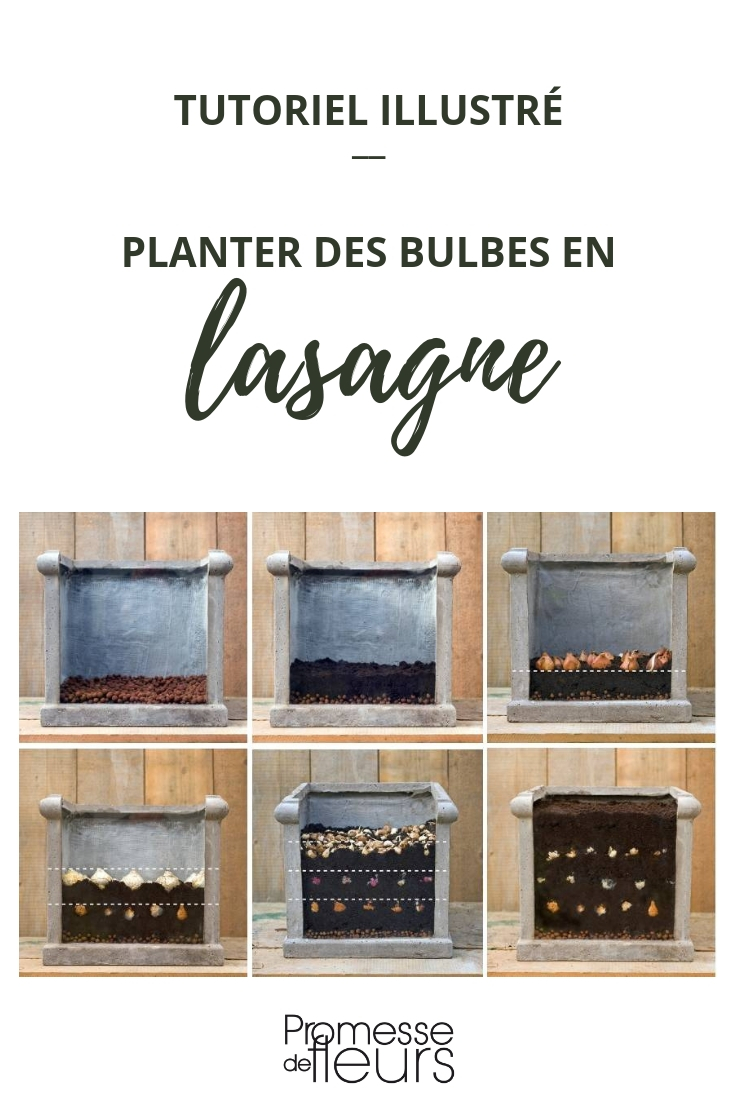 planter des bulbes en pot : technique de la lasagne
