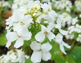 7 vivaces précoces, à planter en octobre