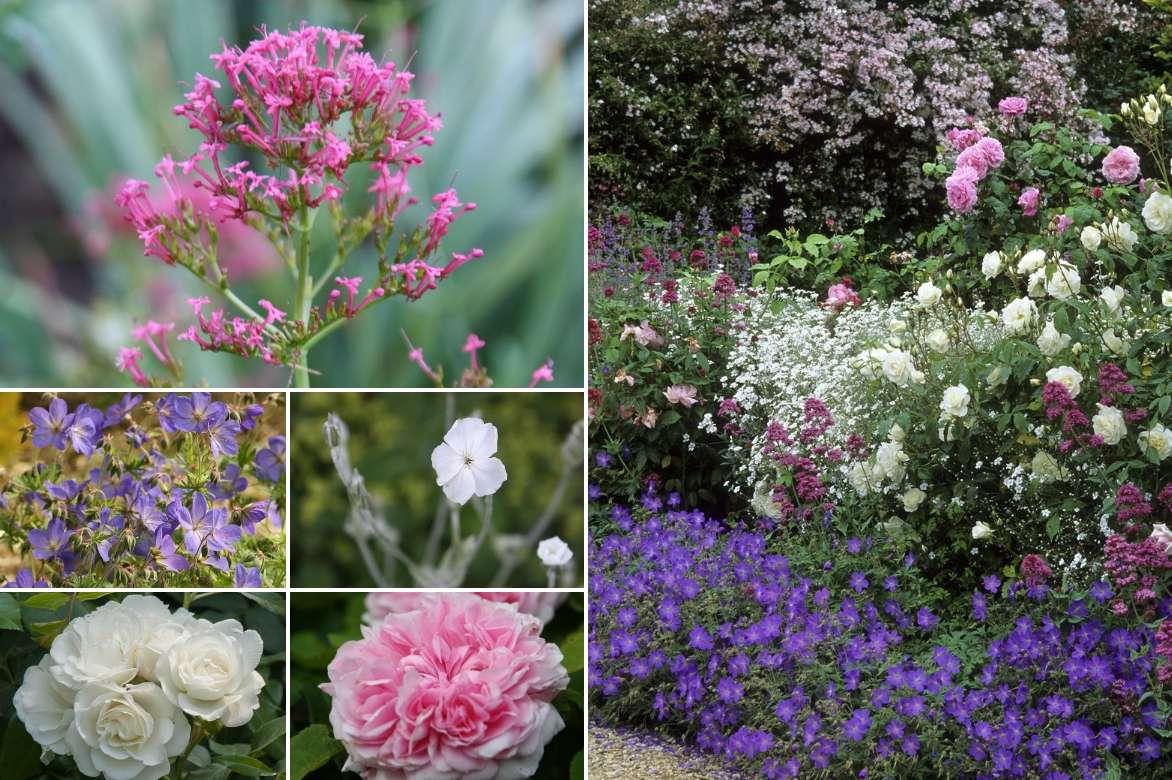 Associer la valériane des jardins