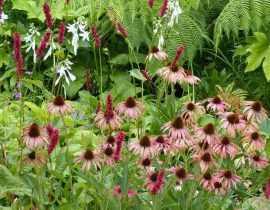 L'entretien des plantes vivaces
