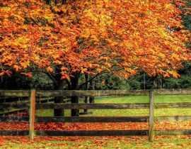 Plantation d'arbres et d'arbustes : que dit la loi ? 8 questions - réponses