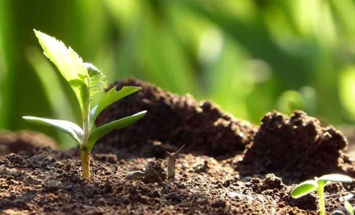 Réussir le semis des plantes vivaces