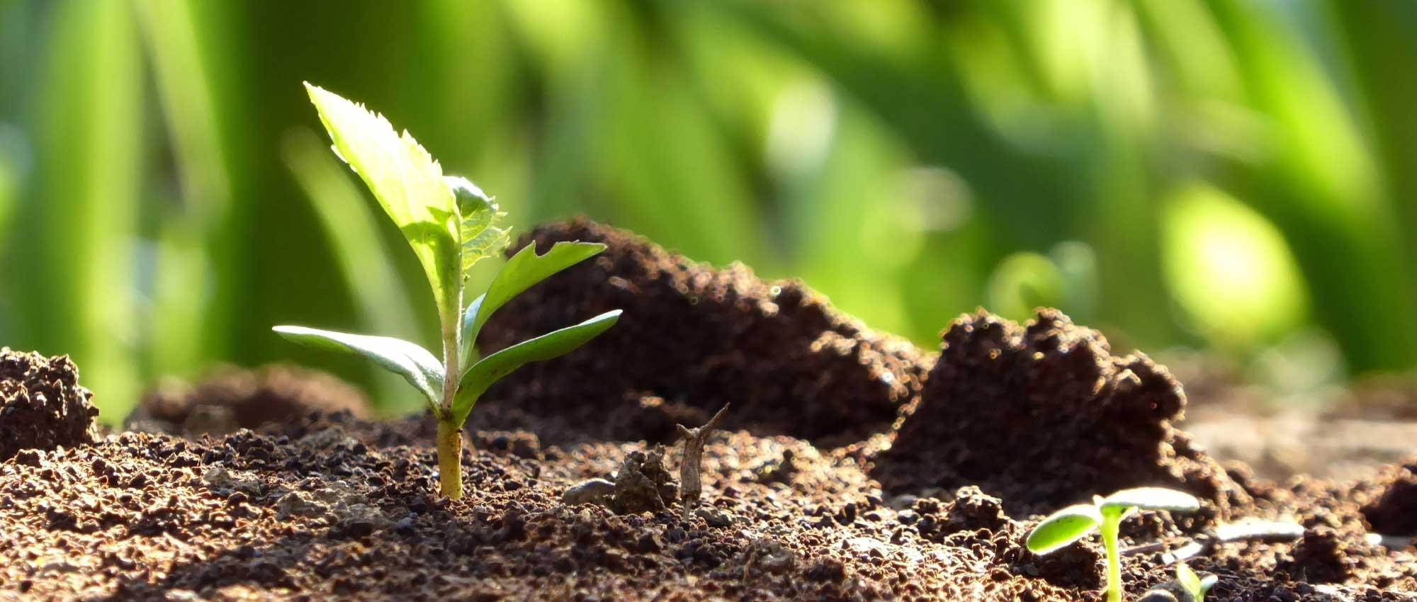 Quel Semis Faire En Septembre semer des plantes vivaces : quand et comment faire ?
