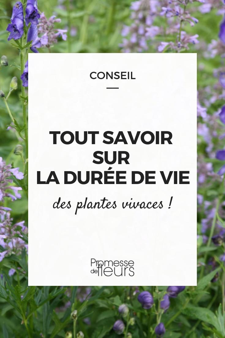 longevite plantes vivaces