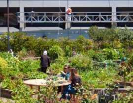 Jardins partagés : des lieux où l'on cultive aussi la solidarité