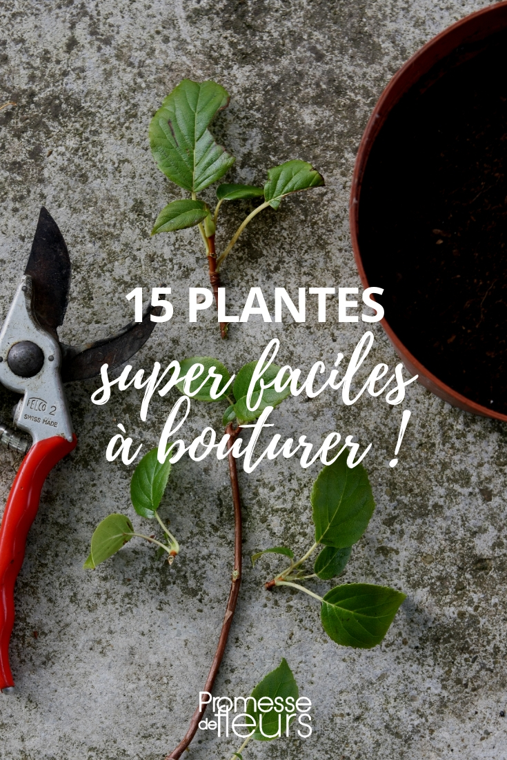 bouturage : les plantes les plus faciles à multiplier