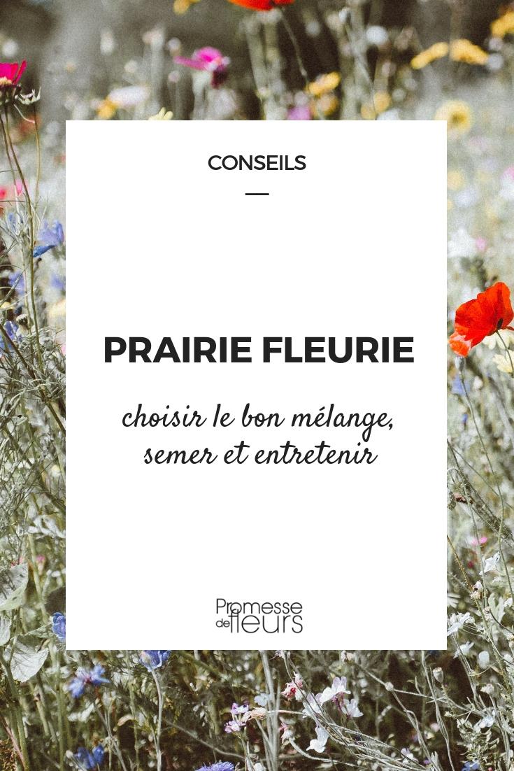 Prairie fleurir : semis, entretien