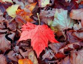 Comment faire un bon terreau de feuilles ? - Tutoriel
