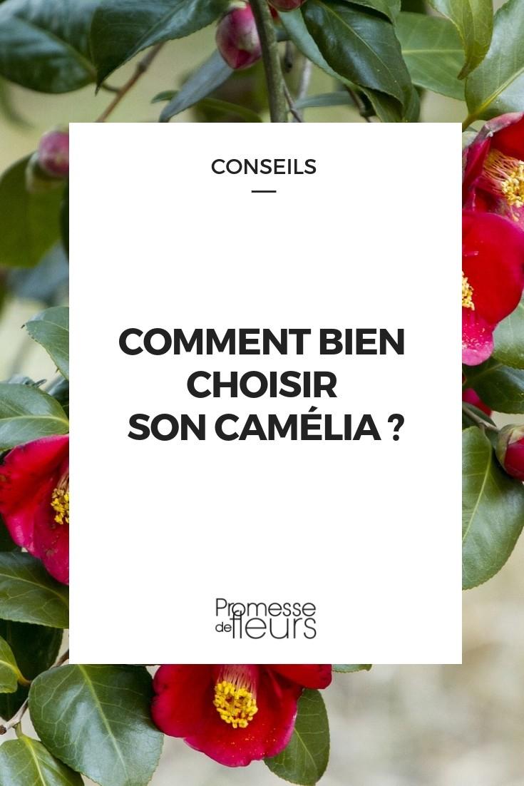 choisir camellia