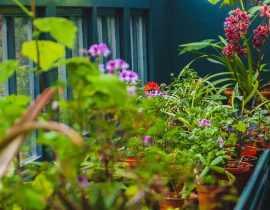 L'hivernage des plantes en pot pour les protéger du froid