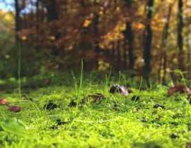 Le pH du sol, qu'est-ce que c'est ?