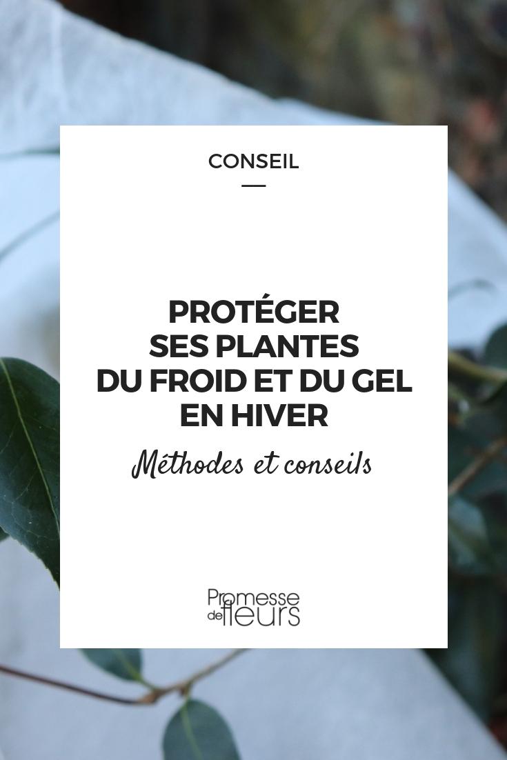protéger les plantes du gel et du froid - conseils