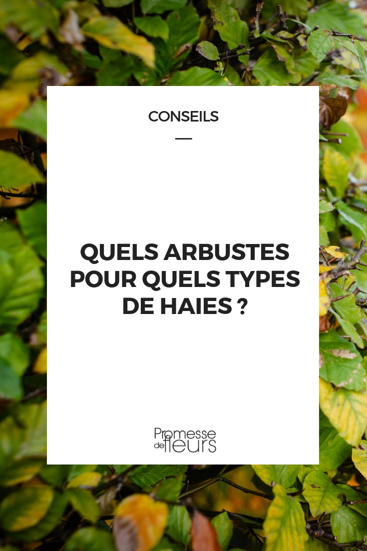 arbustes par types de haies
