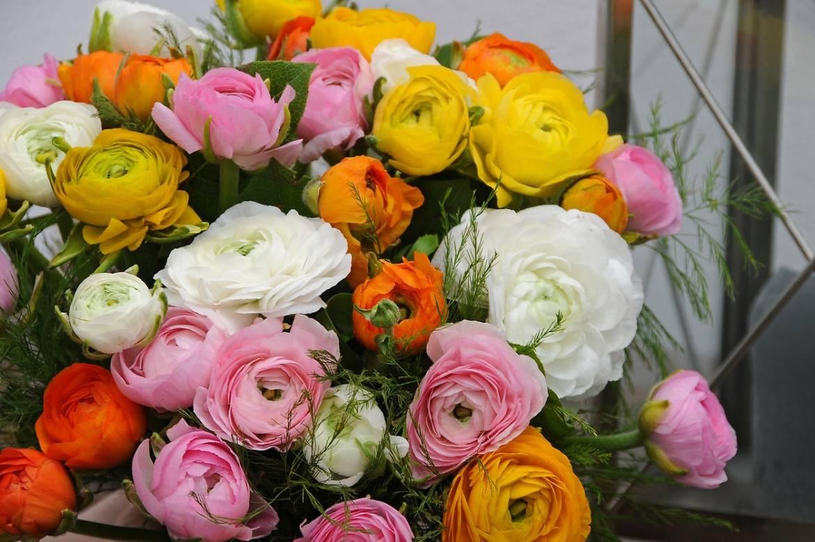 les renoncules des fleuristes plantation culture entretien et utilisation promesse de fleurs. Black Bedroom Furniture Sets. Home Design Ideas