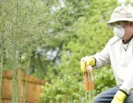 Pesticides : 6 questions sur l'interdiction aux particuliers à partir du 1er janvier 2019