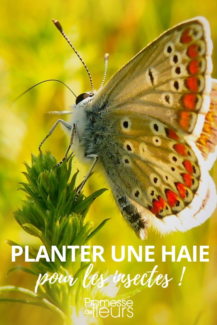 haie insectes