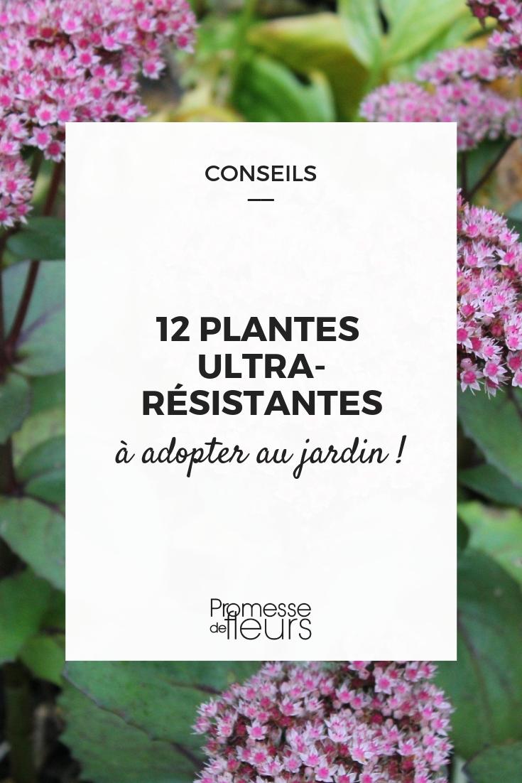 plantes increvables jardin