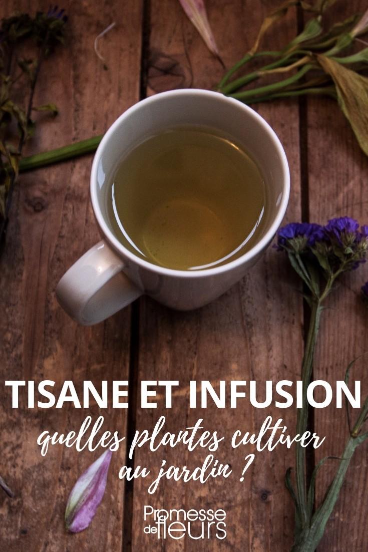 tisane et infusion