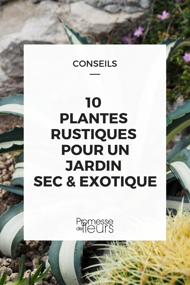 plante exotique et rustique