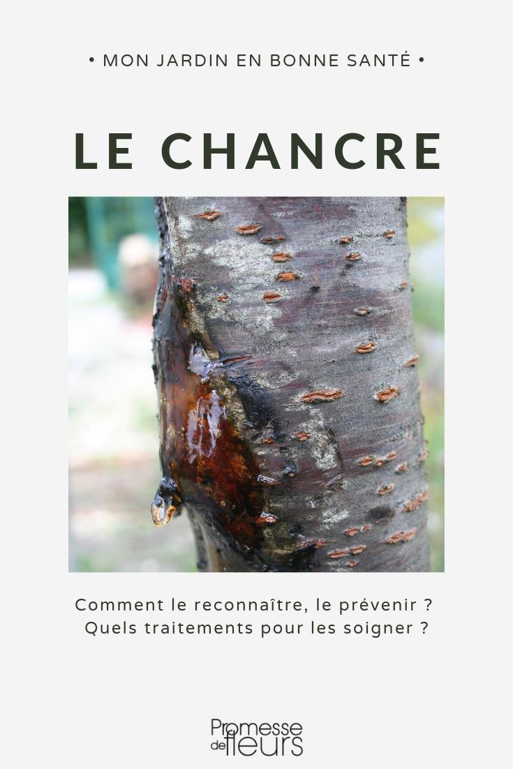 chancre arbre