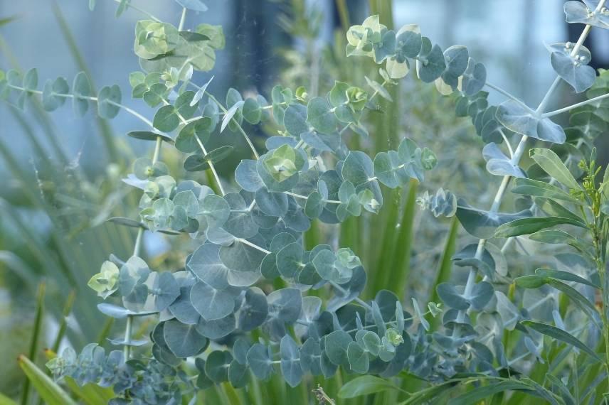 10 plantes anti moustiques r pulsives et efficaces promesse de fleurs. Black Bedroom Furniture Sets. Home Design Ideas