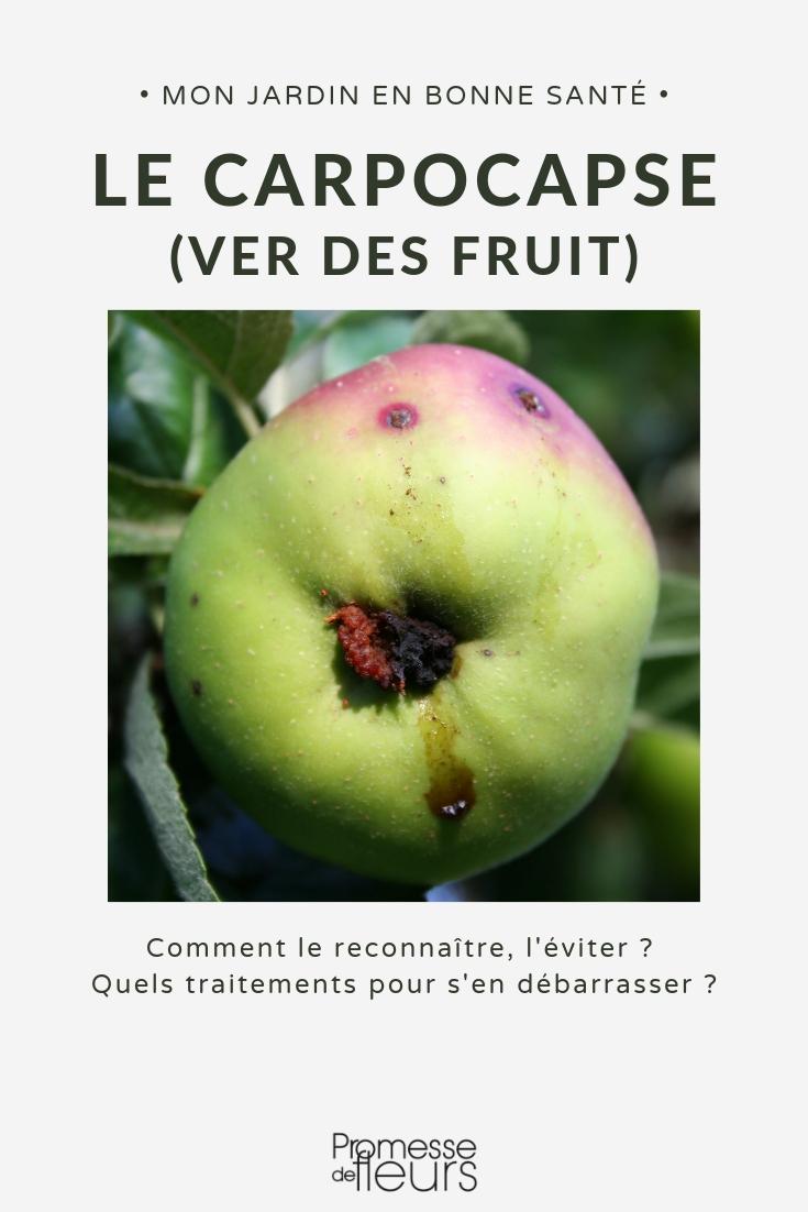 carpocapse, vers dans fruit