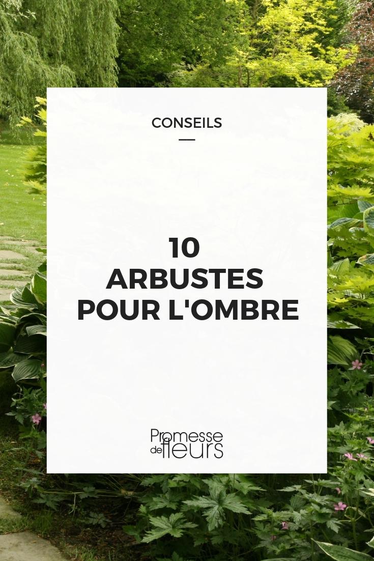 Arbuste Persistant Pour Pot arbuste d'ombre : 10 variétés indispensables au jardin