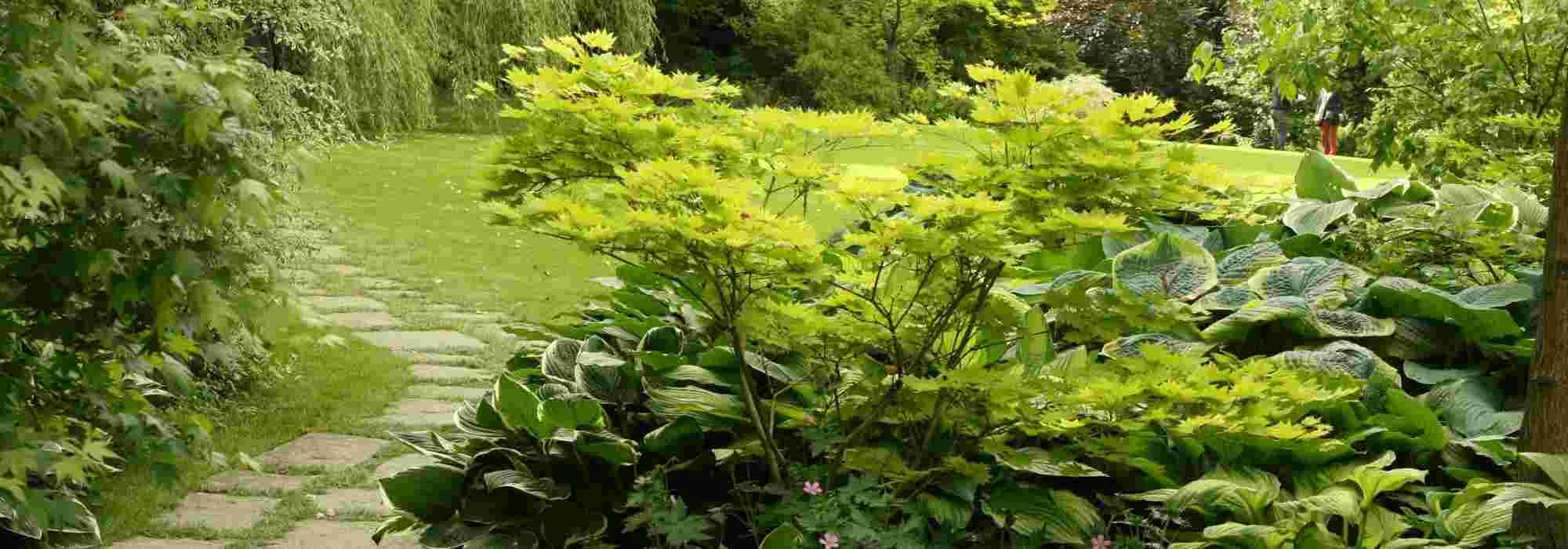 Arbuste Pour Terrain Calcaire arbuste d'ombre : 10 variétés indispensables au jardin
