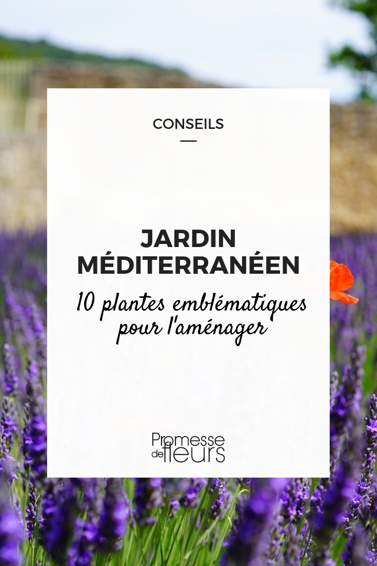 plantes pour jardin méditerranéen