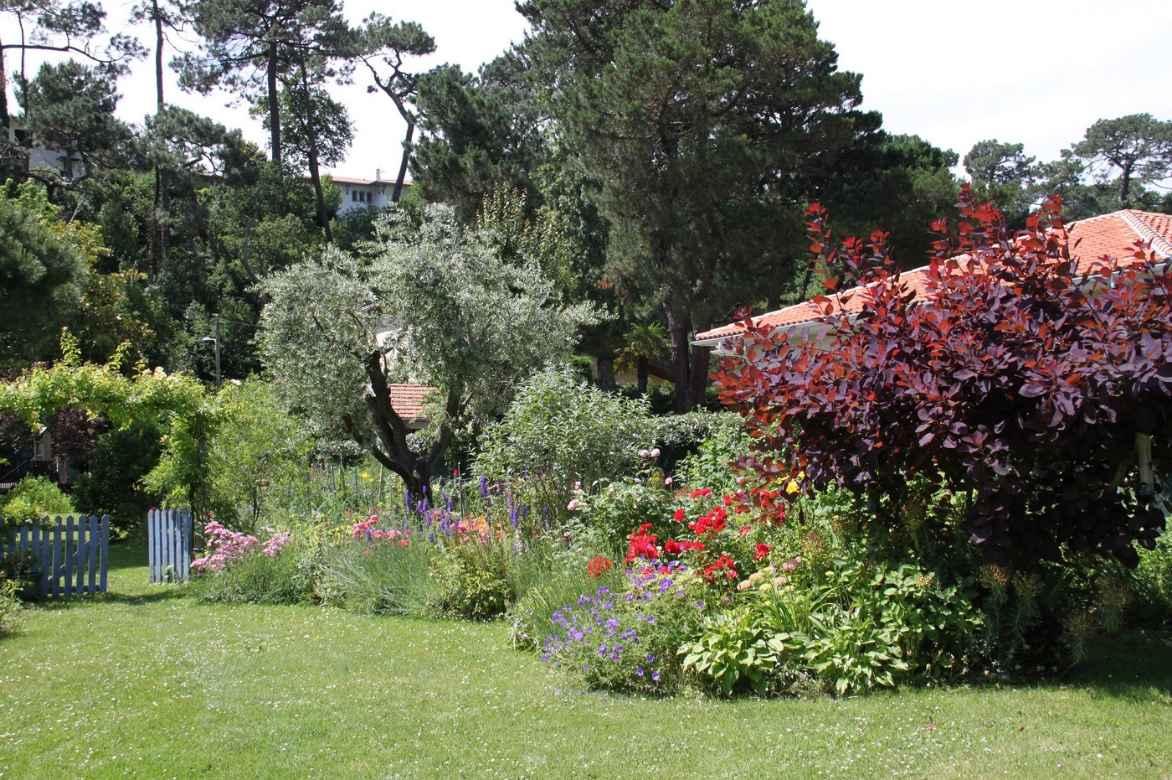 Olivier, Olea europaea : plantation, taille - Nos conseils